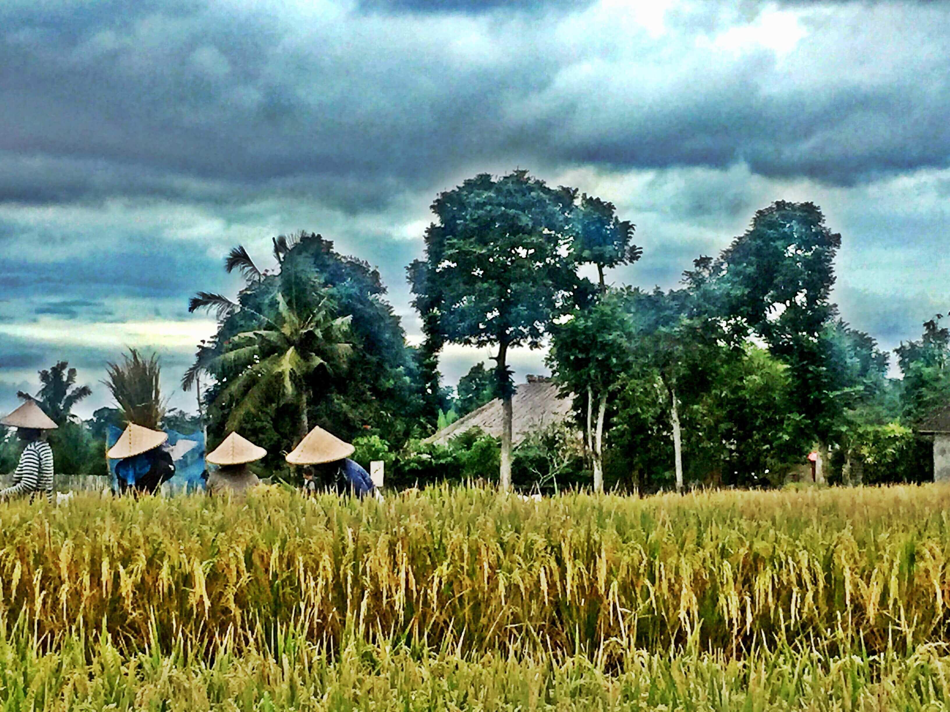 Annaway-Bali-Ubud-Reisfeld-Blog