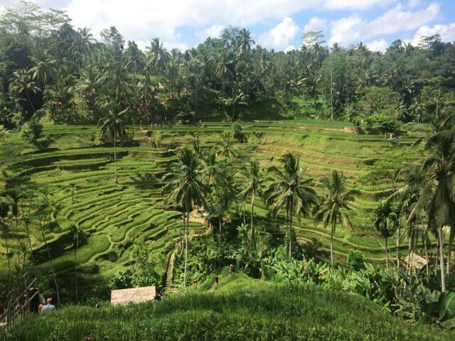 Reisterrassen Bali Ubud