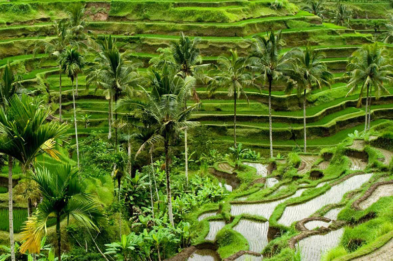 Rice Terraces Bali ubud Annaway Travel