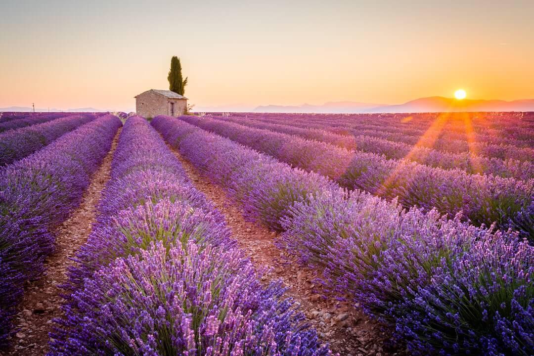 Annaway Top 10 Reiseziele 2018 Lavendel Route Provence France-min