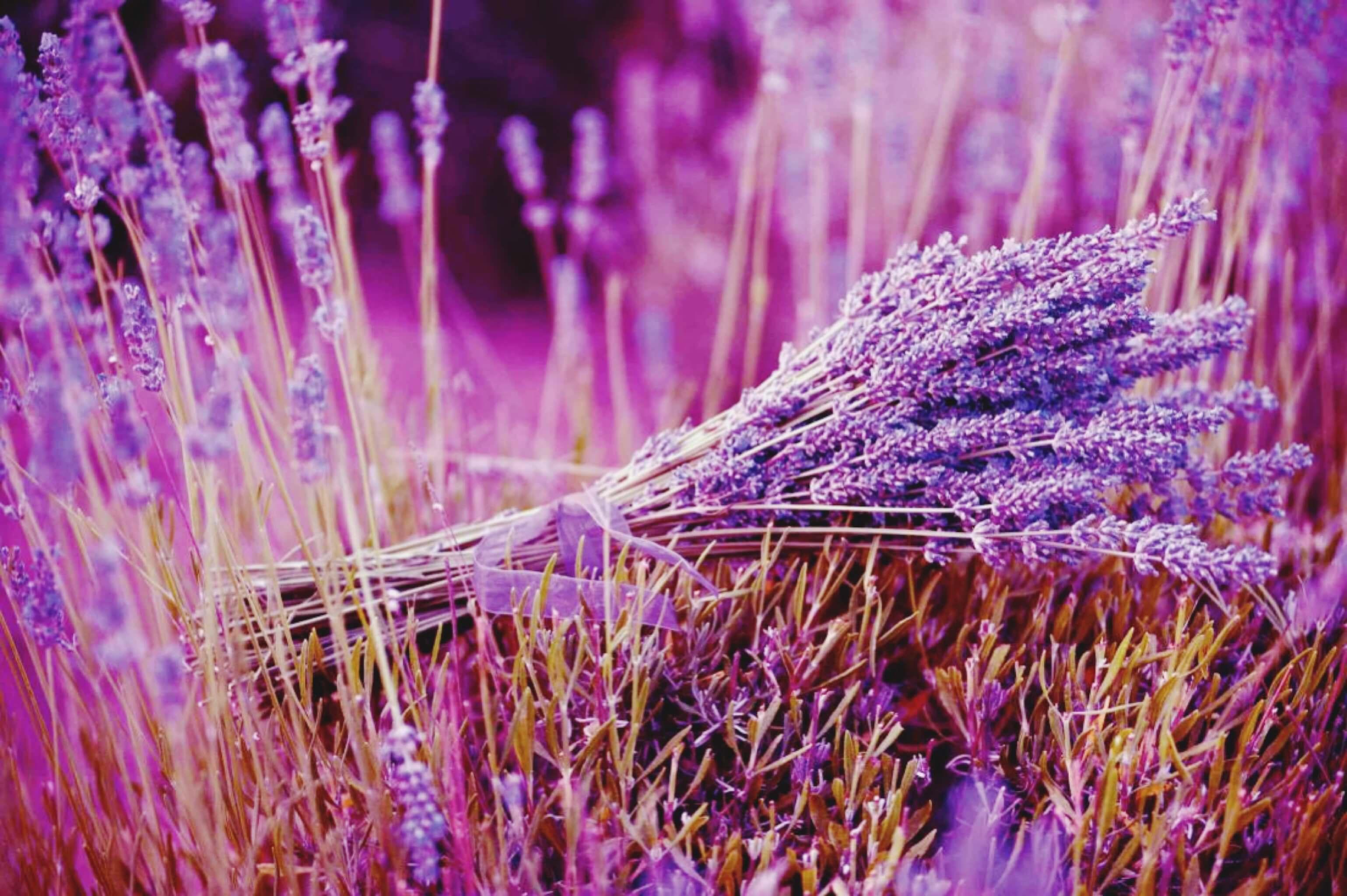 Annaway Travelblog Anna Der Duft der Welt Lavendel