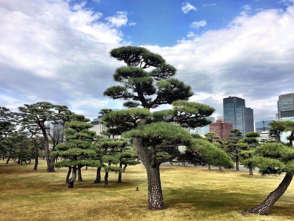 Kirschblüten in Tokio Annaway Travelblog 1200