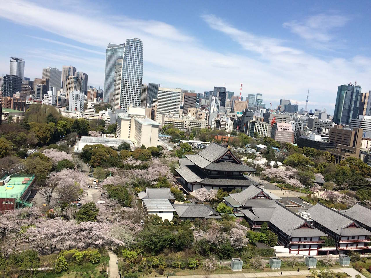 Kirschblüten in Tokio Annaway Travelblog 1221 rappongi hills
