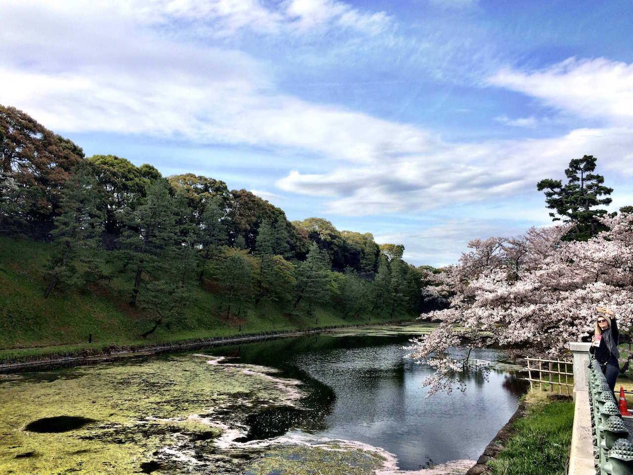Kirschblüten in Tokio Annaway Travelblog 1221186
