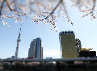 Kirschblüten in Tokio Annaway Travelblog 366