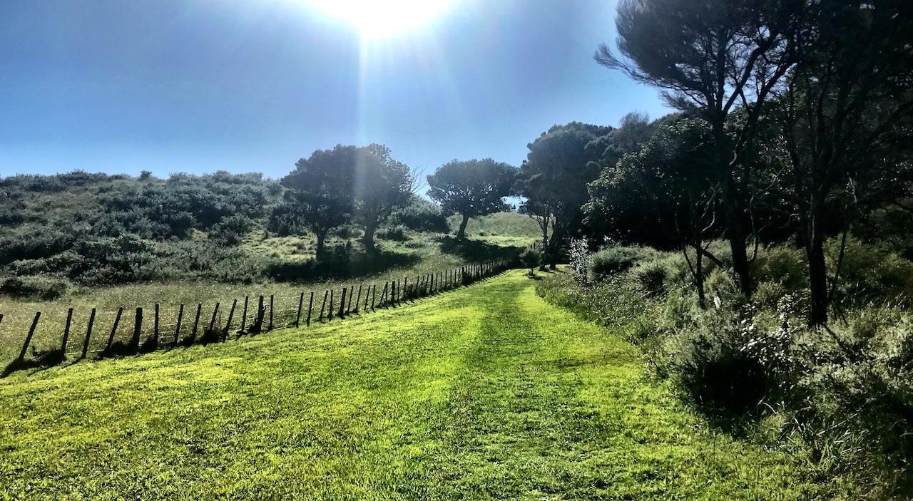 Waiheke Island - Auf den Spuren des Weines Annaway Travelblog Neuseeland Travel Reisen 089