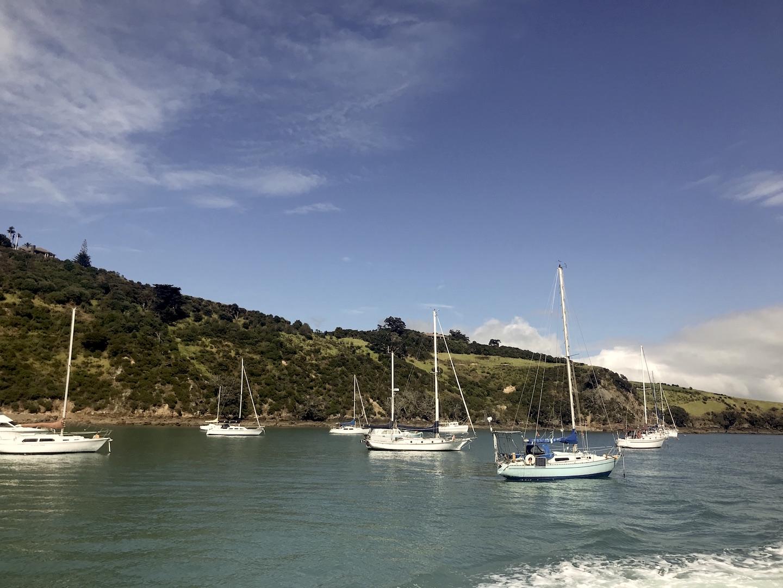 Waiheke Island - Auf den Spuren des Weines Annaway Travelblog Neuseeland Travel Reisen 26009