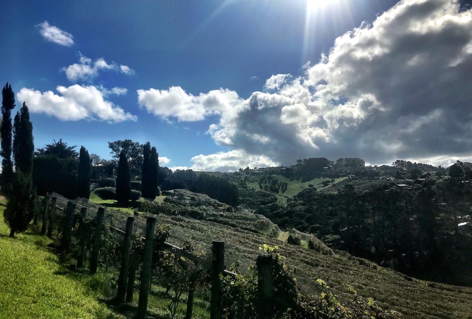 Waiheke Island - Auf den Spuren des Weines Annaway Travelblog Neuseeland Travel Reisen 267