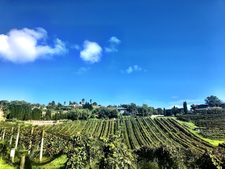 Waiheke Island - Auf den Spuren des Weines Annaway Travelblog Neuseeland Travel Reisen 2908