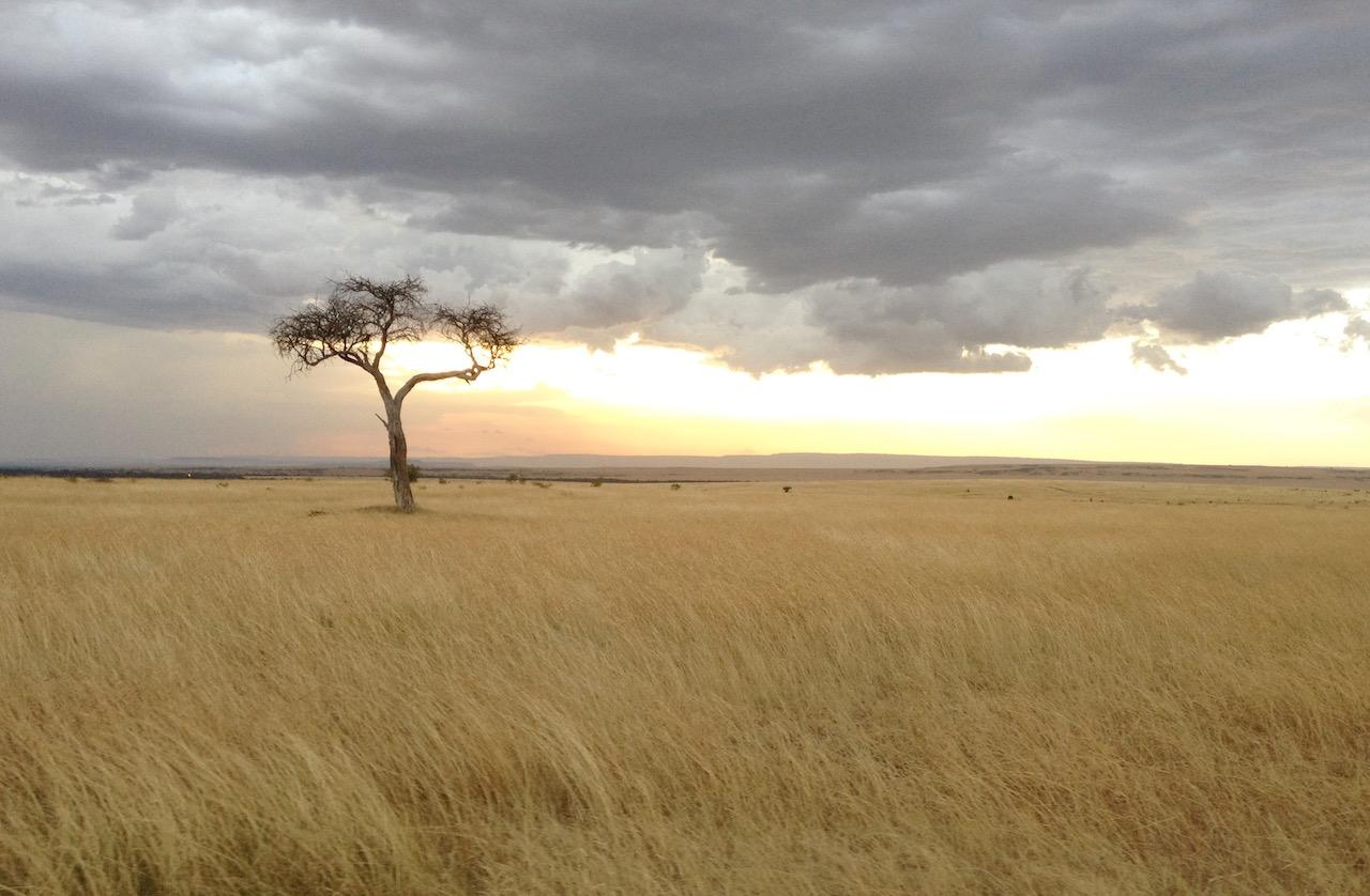 Sonnenaufgang Safari Tansania Game Drive